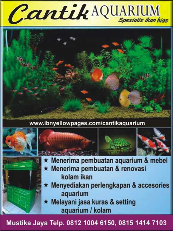 Aquarium Ibn Yellowpages On Internet